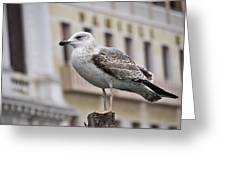 Venice Seagull Greeting Card