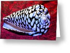 Venomous Conus Shell Greeting Card