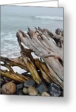 Ventura Driftwood II Greeting Card