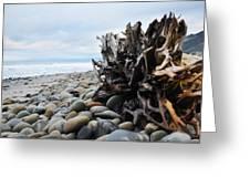 Ventura Driftwood  Greeting Card