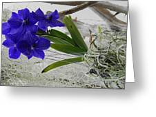 Vera The Vanda Greeting Card