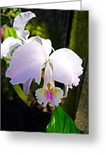 Veraflora Orchid  Greeting Card