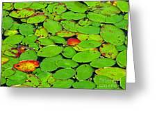 Verdant Swamp Greeting Card