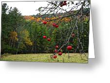 Vermont Apples Greeting Card