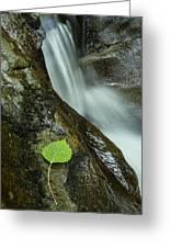 Vermont Aspen Leaf Waterfall Camels Hump Duxbury Greeting Card