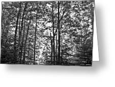Vermont Forest Sunrise Ricker Pond Black And White Greeting Card