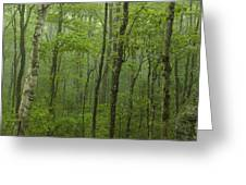 Vermont Mount Mansfield Green Forest Fog Panorama Greeting Card