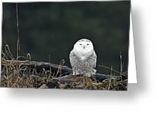 Vermont Snowy Owl Greeting Card
