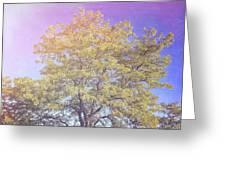 Vermont Tree Light Leak Sunflare  Greeting Card