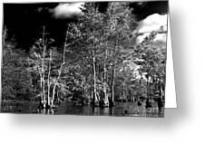 Vernon Lake Trip Greeting Card