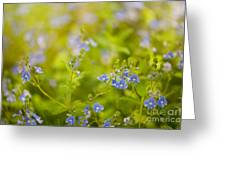 Veronica Chamaedrys Named Speedwell Or Gypsyweed Greeting Card