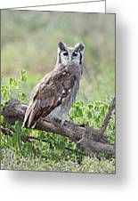 Verreauxs Eagle-owl Bubo Lacteus Greeting Card