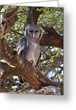 Verreauxs Eagle Owl In Tree Greeting Card