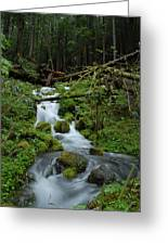 Vertical Cascading Brook Greeting Card