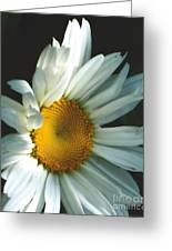 Vertical Daisy Greeting Card