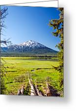 Vertical Mount Bachelor Greeting Card