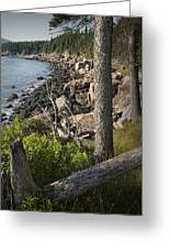 Vertical Photograph Of The Rocky Shore In Acadia National Park Greeting Card