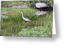 Very Hungry Blue Heron Greeting Card