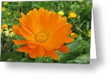 Very Lovely Orange Bloom Greeting Card