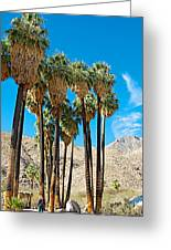Very Tall Fan Palms In Andreas Canyon In Indian Canyons-ca Greeting Card