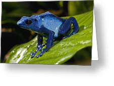 Very Tiny Blue Poison Dart Frog Greeting Card