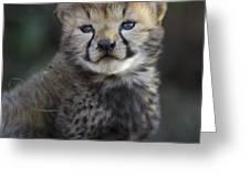 Very Young Cheetah Cub Maasai Mara Greeting Card by Suzi Eszterhas