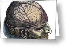 Vesalius: Cranium Greeting Card