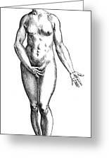Vesalius: Female Nude Greeting Card