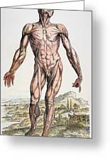 Vesalius: Muscles 01 Greeting Card