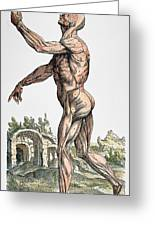 Vesalius: Muscles 02, 1543 Greeting Card