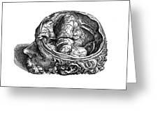Vesalius: Olfactory Organs Greeting Card