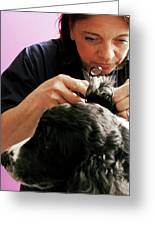 Vet Examining A Dog Greeting Card