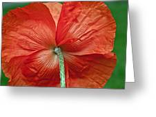 Veterans Day Remembrance Greeting Card