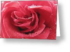 Veteran's Honor Rose Greeting Card