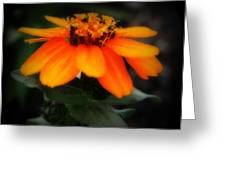 Vibrant Colored Zinnia Greeting Card