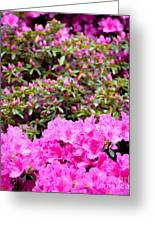 Vibrant Colors Greeting Card