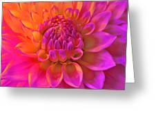 Vibrant Dahlia Flower Greeting Card