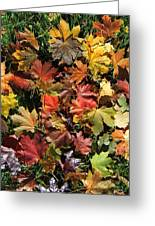 Vibrant Days Of Autumn Greeting Card by Margaret McDermott