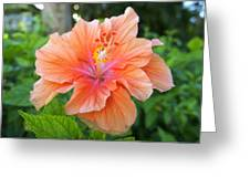 Vibrant Hibiscus Greeting Card