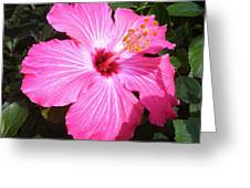 Vibrant Pink Hibiscus Greeting Card