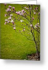 Vibrant Pink Magnolia Blossoms Greeting Card