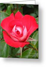 Vibrant Red Rose Greeting Card