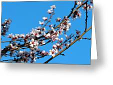 Vibrant Spring Greeting Card