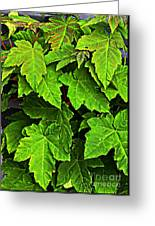 Vibrant Young Maples - Acer Greeting Card
