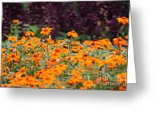 Vibrant Zinnias Greeting Card
