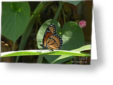 Viceroy 2 Greeting Card