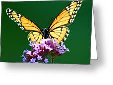 Viceroy Butterfly Square Greeting Card