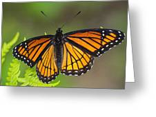 Viceroy On Fern Frond Greeting Card