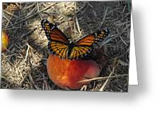 Viceroy On Peach Greeting Card