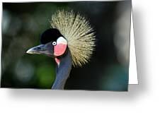 Victoria Crowned Crane Greeting Card